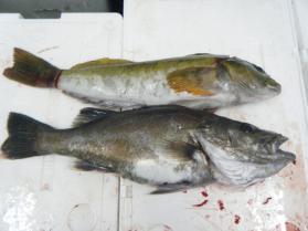 6鮮魚セット5.31