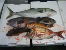 4鮮魚セット5.31