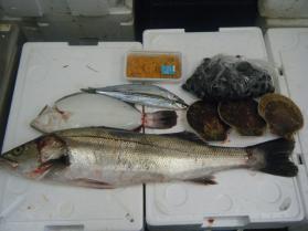 2鮮魚セット5.31