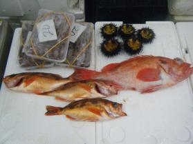 1鮮魚セット5.31