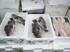 10鮮魚セット5.31