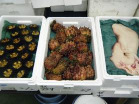 14鮮魚セット5.31