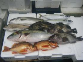 6鮮魚セット6.30