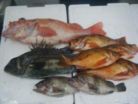 4鮮魚セット6.30