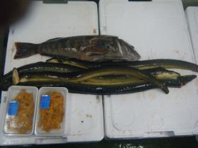 9鮮魚セット6.30