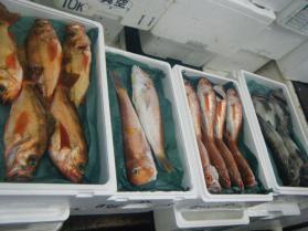 8鮮魚セット6.30