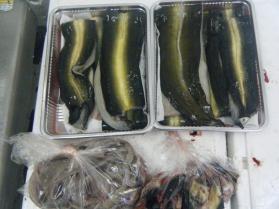10鮮魚セット6.30