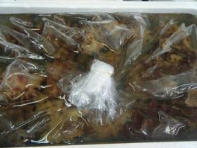 6鮮魚セット7.31