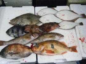 2鮮魚セット7.31