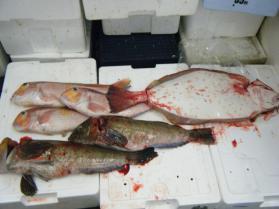 11鮮魚セット7.31