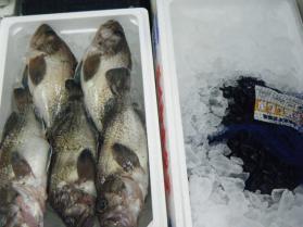 9鮮魚セット7.31