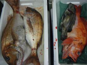 8鮮魚セット7.31
