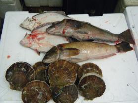 2鮮魚セット8.31