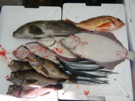 1鮮魚セット8.31