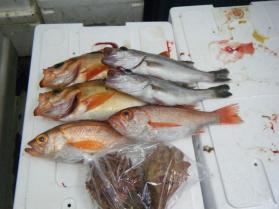 4鮮魚セット9.29