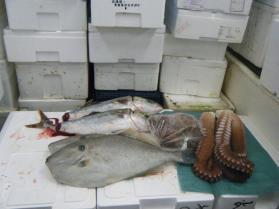 3鮮魚セット9.29