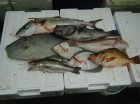2鮮魚セット9.29