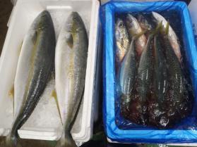6鮮魚セット10.31