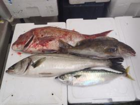 5鮮魚セット10.31