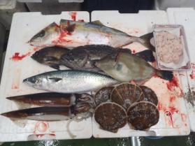4鮮魚セット1130