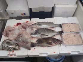 3鮮魚セット1130