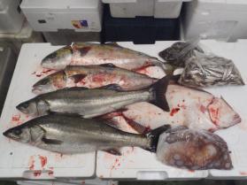 2鮮魚セット1130
