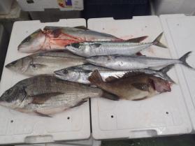 1鮮魚セット1130