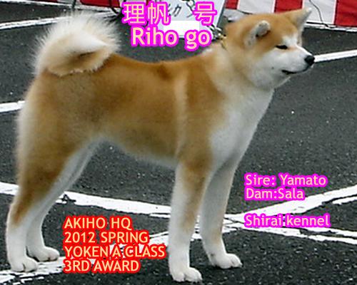 riho2012.jpg