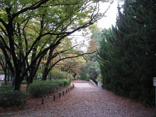 植物園を出たところの紅葉。
