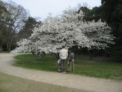 奇跡的に残っていた満開の桜