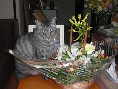 いただいた花とシマ
