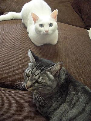 ユキとシマ