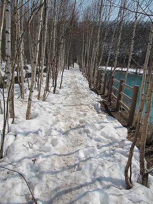 s-池側の小道