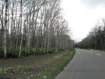 s-白樺街道と散歩道