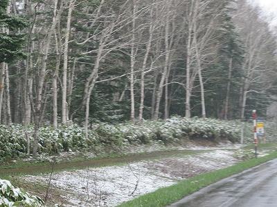 s-雪ですナ~