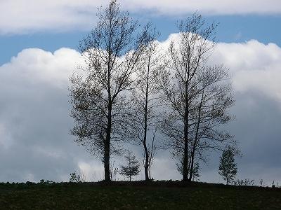 s-三本木