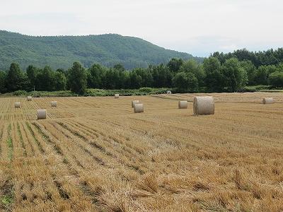 s-麦を刈り終えた後は・・・