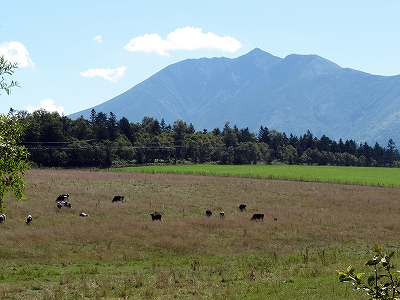 s-オプタテシケ山と牛