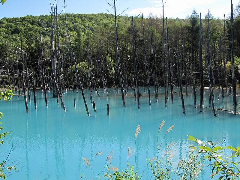 s-ススキを入れての青い池