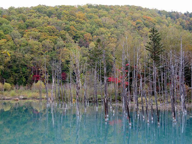 s-青い池 紅葉