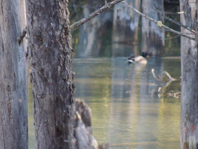 s-青い池にて。