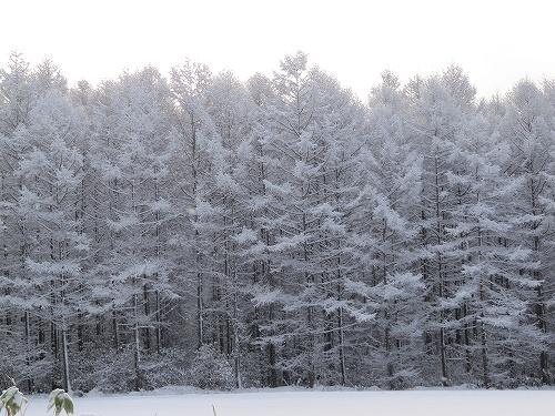 s-雪景色。