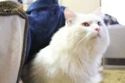 kotatsu cat1 resized