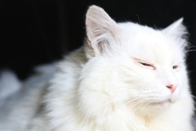 kotatsu cat5 resized