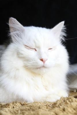 kotatsu cat6 resized