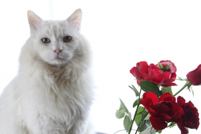 days of the cat and roses4 resized