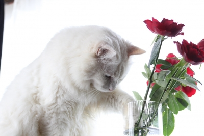 days of the cat and roses2 resized