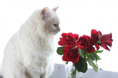 days of the cat and roses5 resized