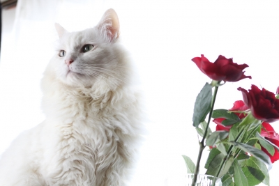 days of the cat and roses8 resized