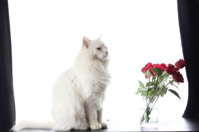 days of the cat and roses6 resized